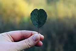 Artikelgrafik: Hand greift nach kleiner Blume